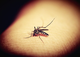 虫刺され対策!新生児から大きくなっても使える対策用品